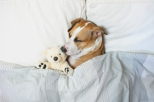 Can Dogs Sleep with Their Eyes Open? (Yes and No)