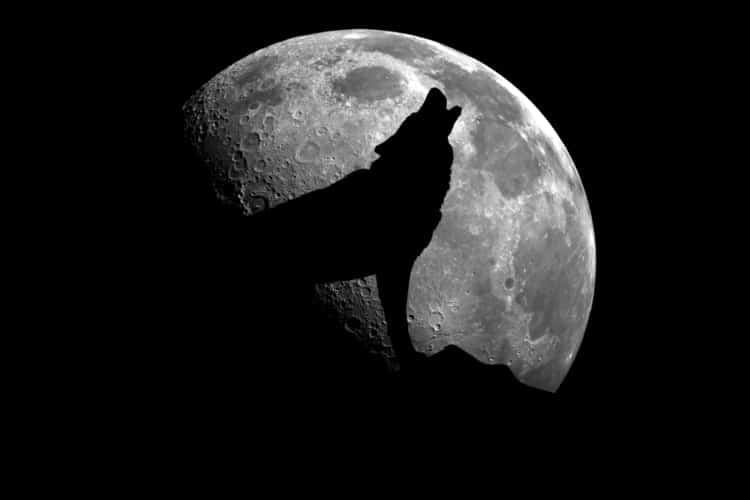 Wolf barking at night with moon in the background