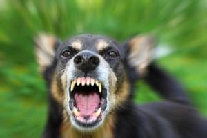 8 Breeds with the Scariest Dog Bark (To Keep Burglars Away)