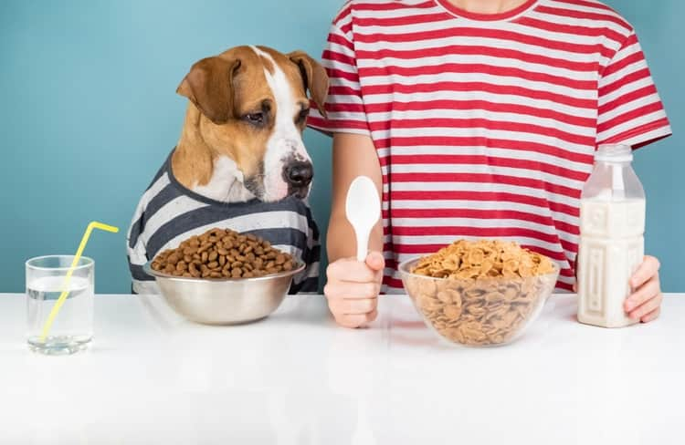 Dog at table eating cheerios for breakfast