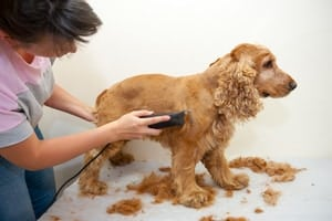Best Dog Clippers for Thick Hair (Grooming at Home)