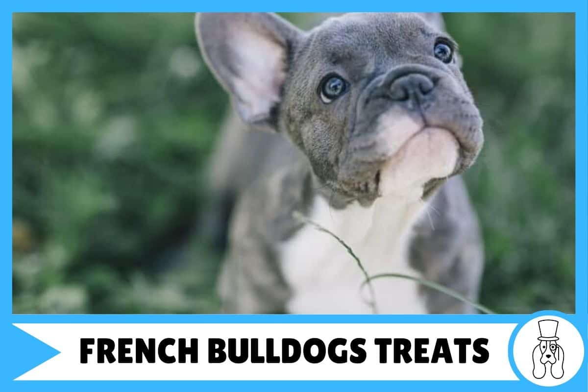 The 5 Best Training Treats for French Bulldogs
