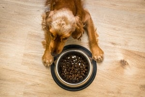 Best Dog Food for Cocker Spaniel with Allergies (5 Gentle Options)
