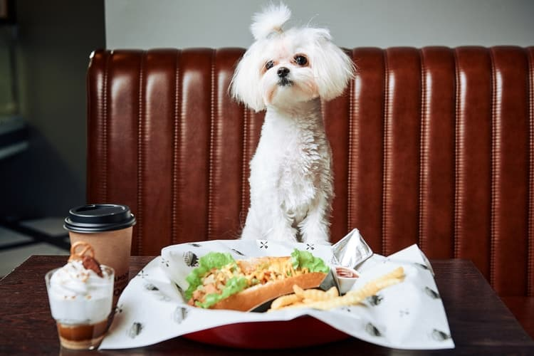 Dog standing up at table in front of burger and french fries