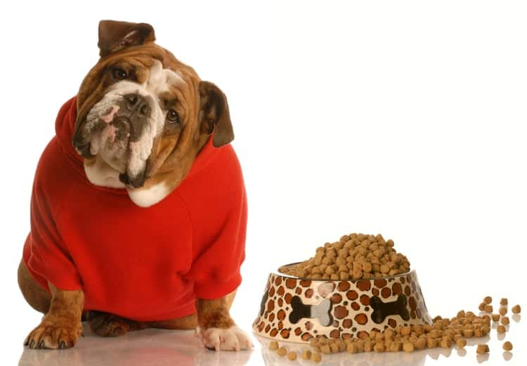 What to Mix With Dry Dog Food? Healthy Dog Tips