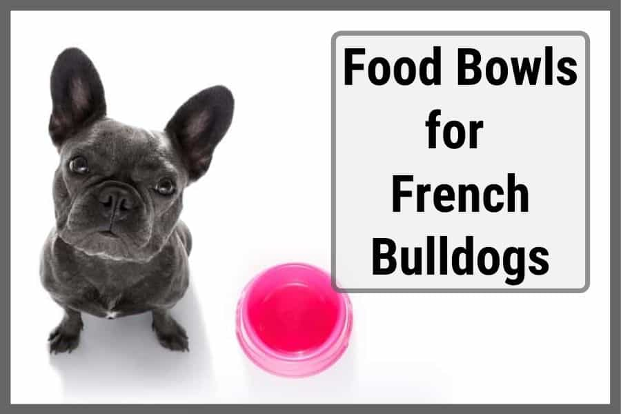 French Bulldog not interested in their food bowls and looking back up at owner