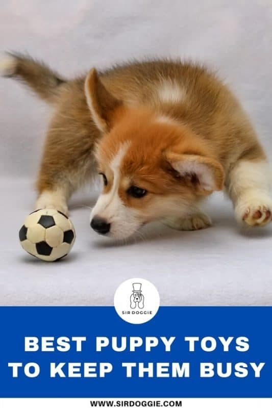 infographic for puppy toys with picture of puppy busy playing with toy