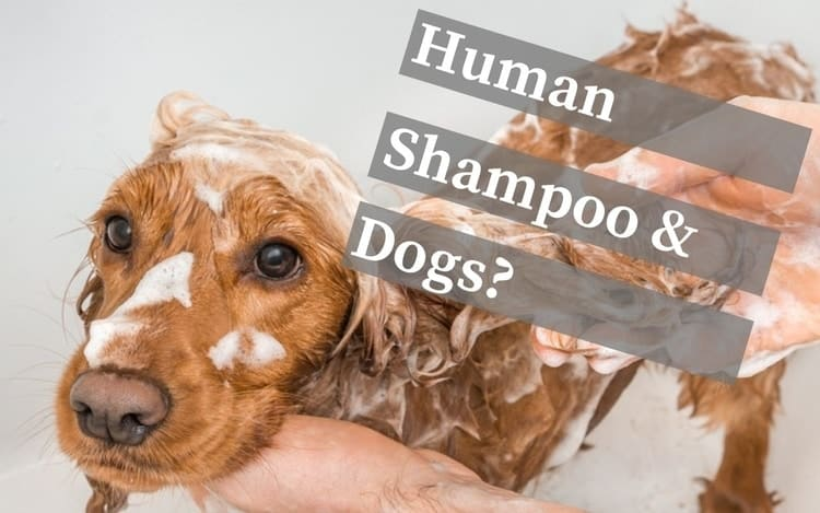 Dog being washed with human shampoo in bath