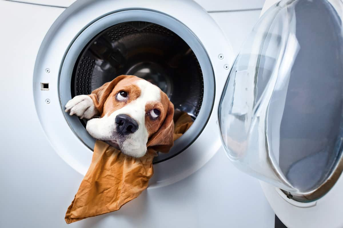 Are Dryer Sheets Toxic for Dogs? DON'T Let Them Eat That
