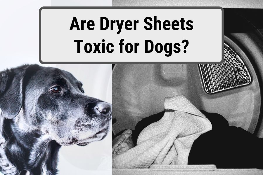 "Dog next to laundry with title text stating ""Are dryer sheets toxic for dogs?"""
