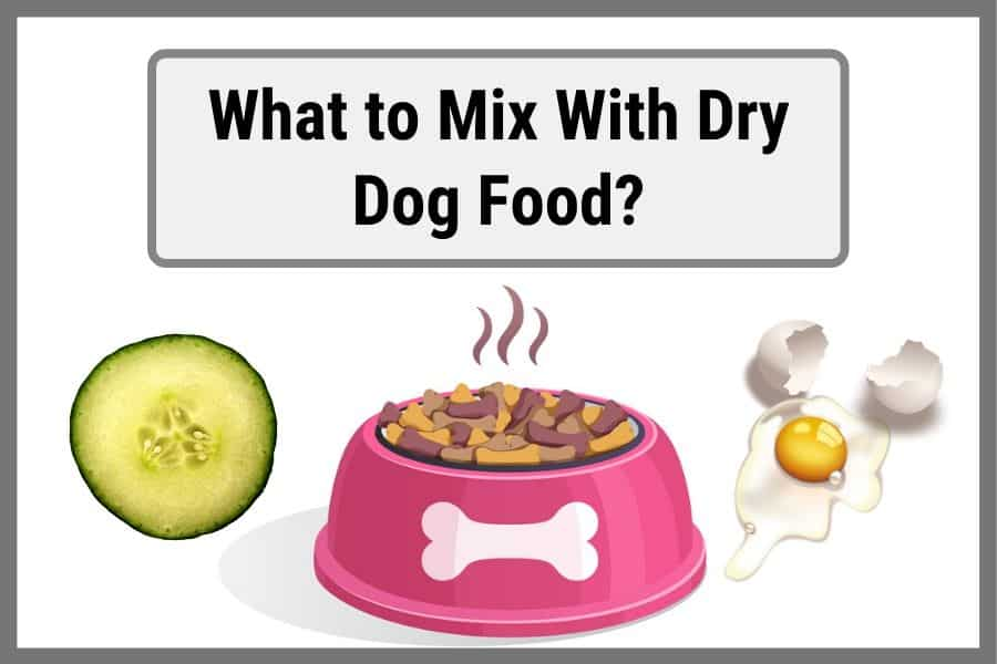 what to mix with dry dog food thumbnail