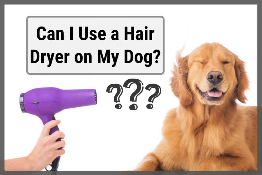 Dog being dried with hair dryer and closing their eyes