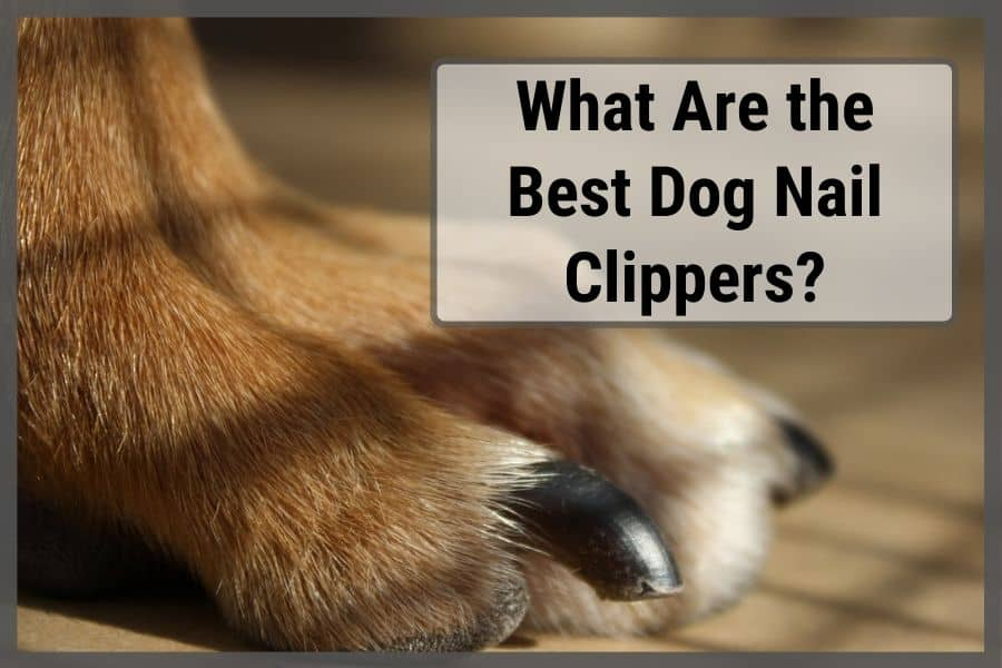 What Are the Best Dog Nail Clippers?
