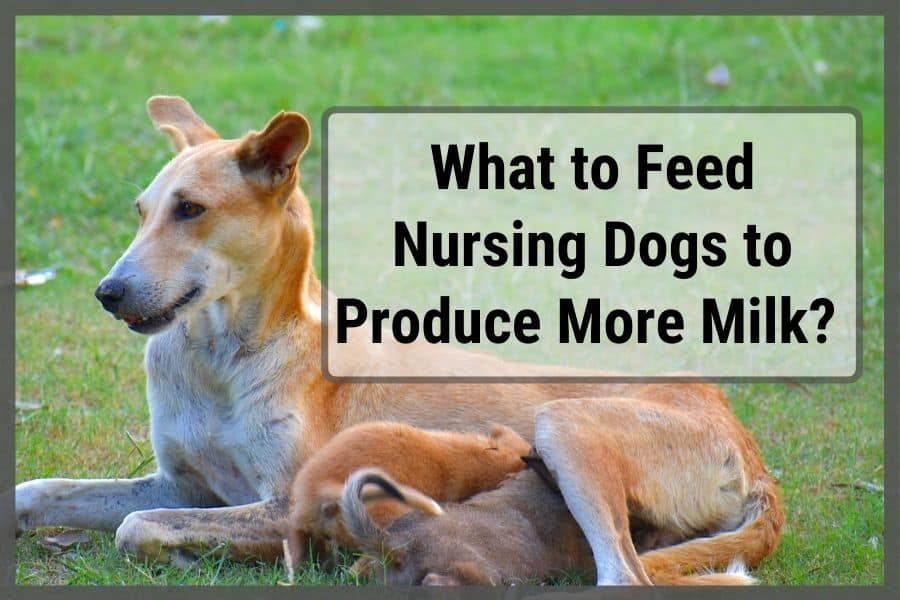 Nursing dogs sitting in park on the grass