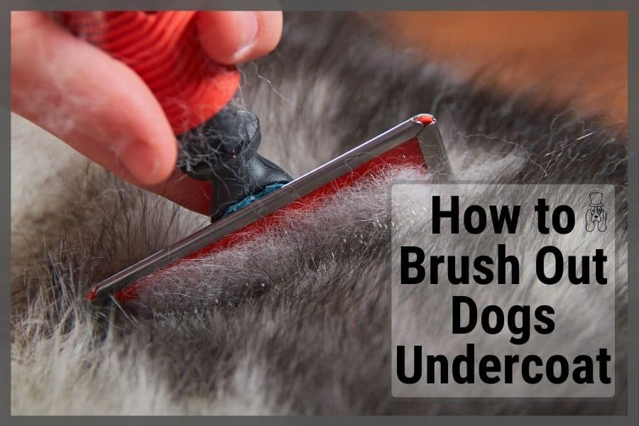 How to Brush Out Dogs Undercoat | The Right Way