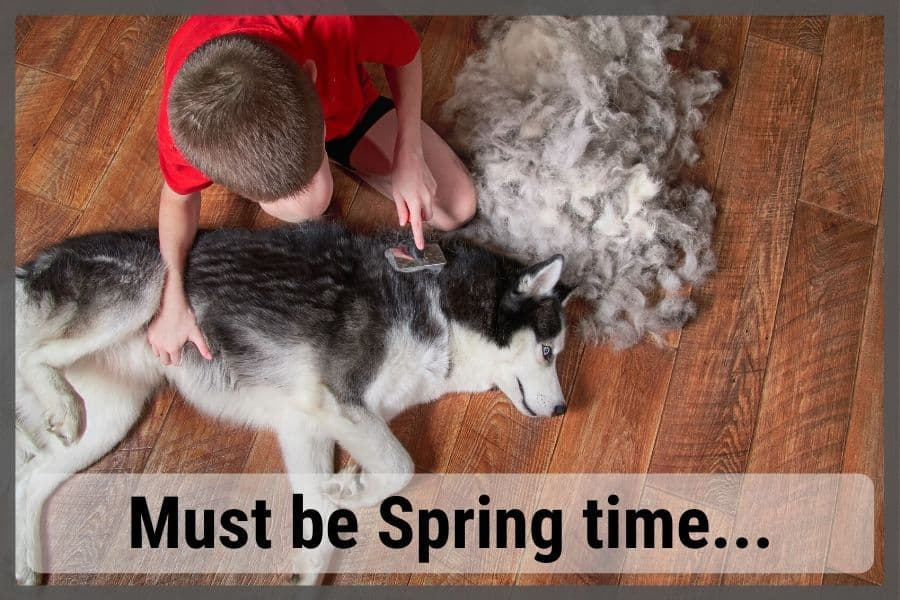 Pile of hair next to dog after brushing their undercoat