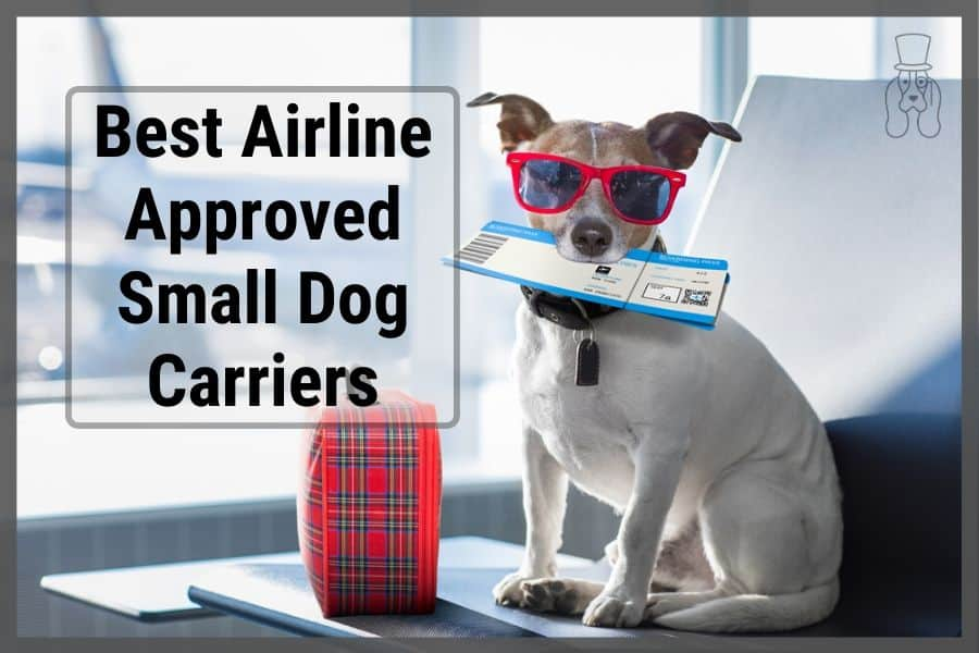 """Dog with sun glasses and airplane tickets in mouth at airport with text on the side stating """"best airplane approved small dog carriers"""""""