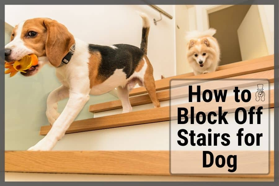 How to Block Off Stairs for Dogs to Keep Them Safe