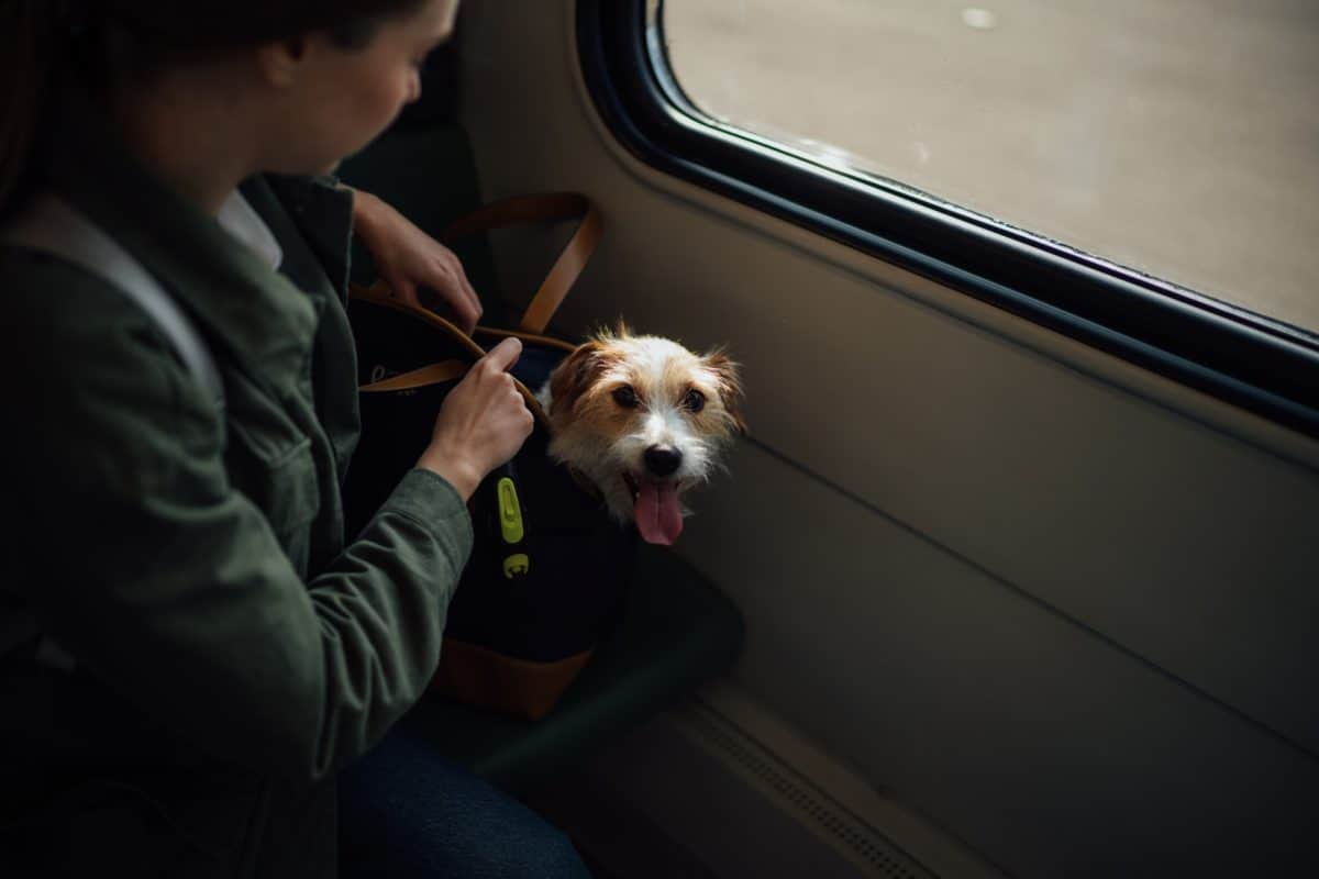 Dog in home made dog sling carrier riding train with owner