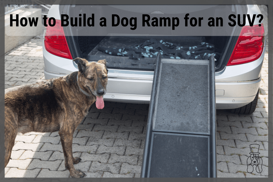 dog getting ready to use ramp for SUV