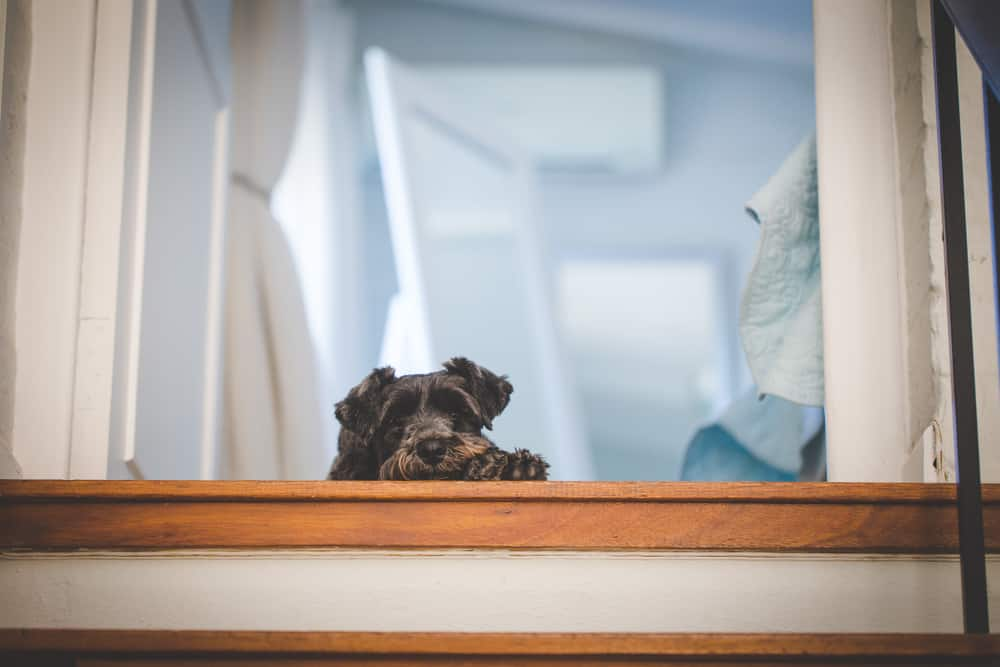 Are Stairs or Ramps Better for Dogs?