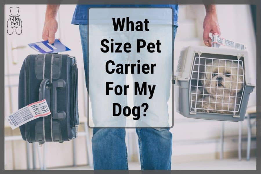 Dog in pet carrier being walked through an airport