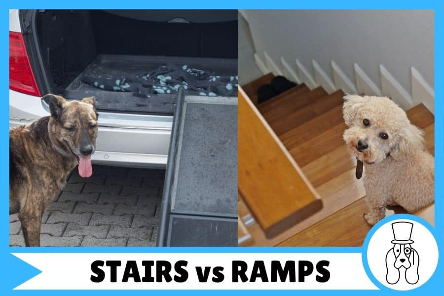 Dog stairs vs dog ramps, a side by side comparison