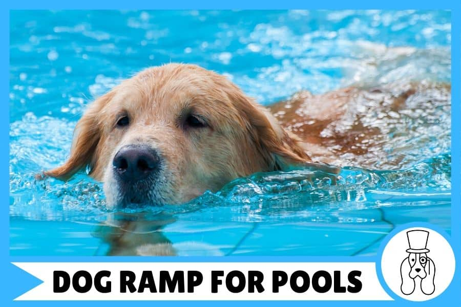 Best Above Ground Pool Dog Ramp | find the right one