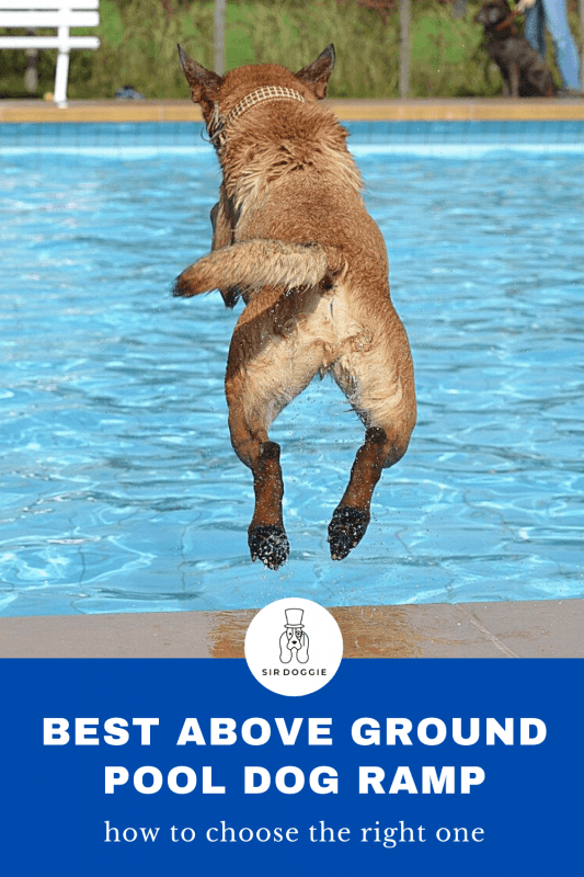 """Dog in mid air jumping into pool with text underneath stating """"best above ground pool dog ramp"""""""