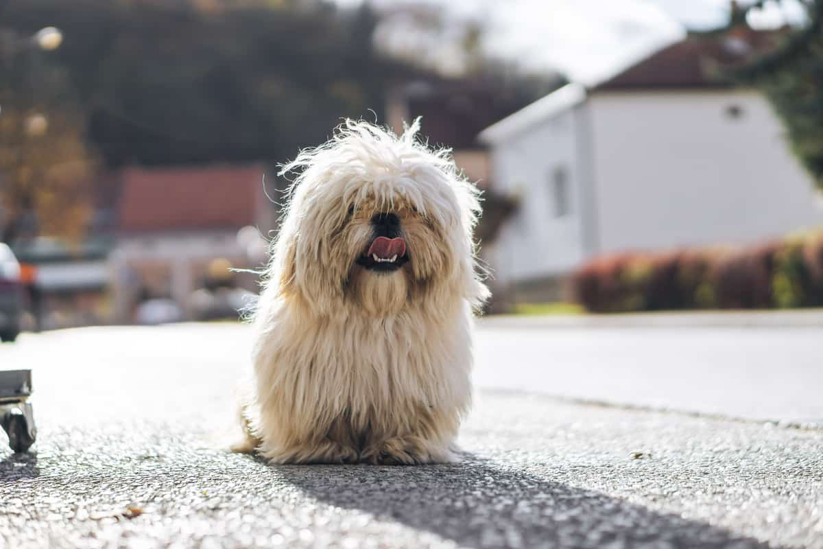 61 Of The Most Popular Korean Dog Names