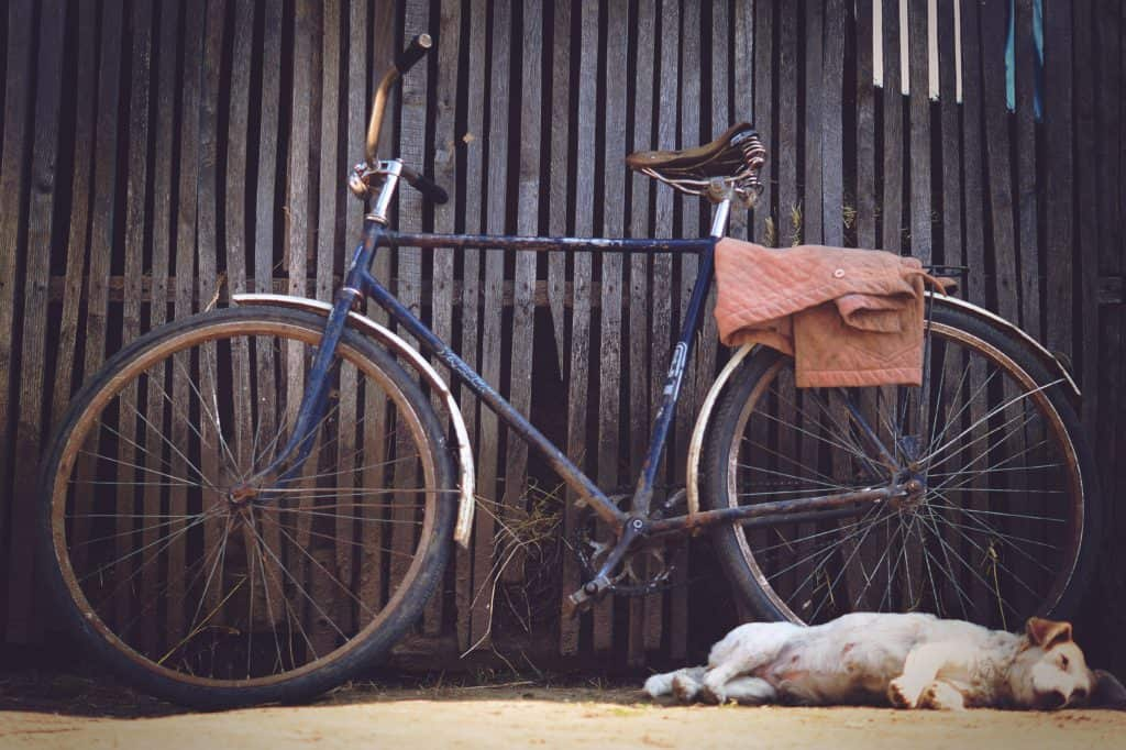 Dog who is not afraid of bikes sleeping next to one on the ground.