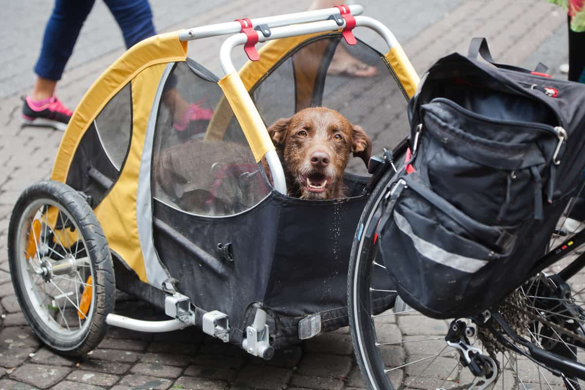 How Do You Attach A Dog Bicycle Trailer?