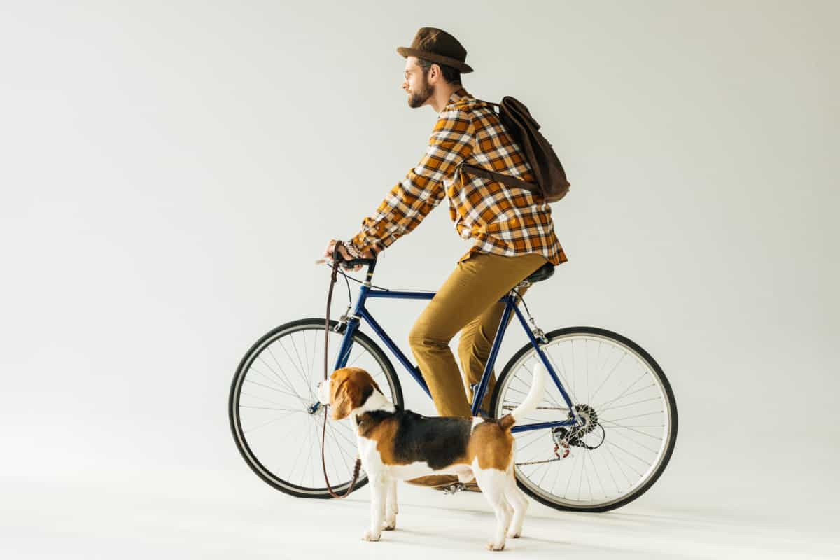 Is cycling with a dog cruel? Man on bike riding with beagle dog on leash