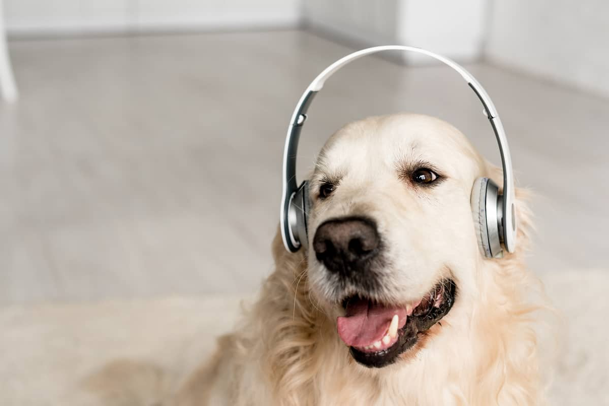 10 Reasons Your Dog Won't Listen (+7 Ways To Help)