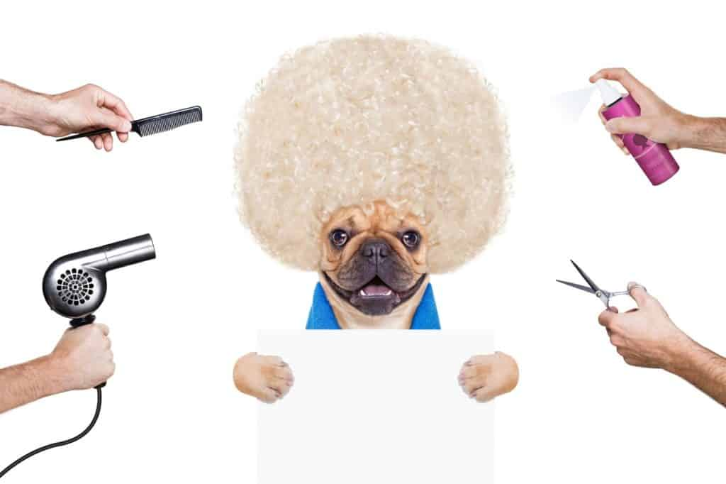 french bulldog being groomed by brush and other dog grooming tools