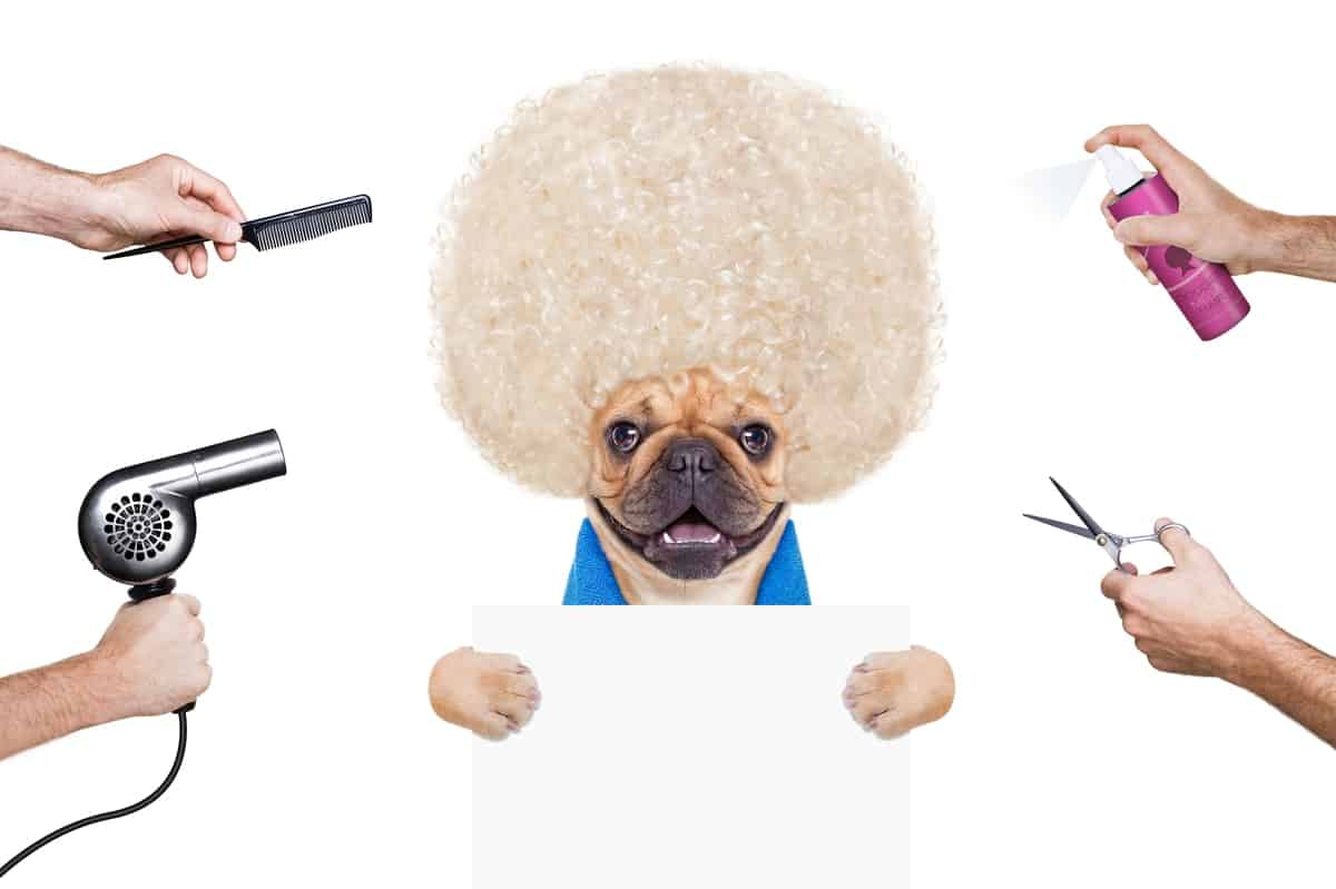 Top 3 Dog Brushes for French Bulldogs