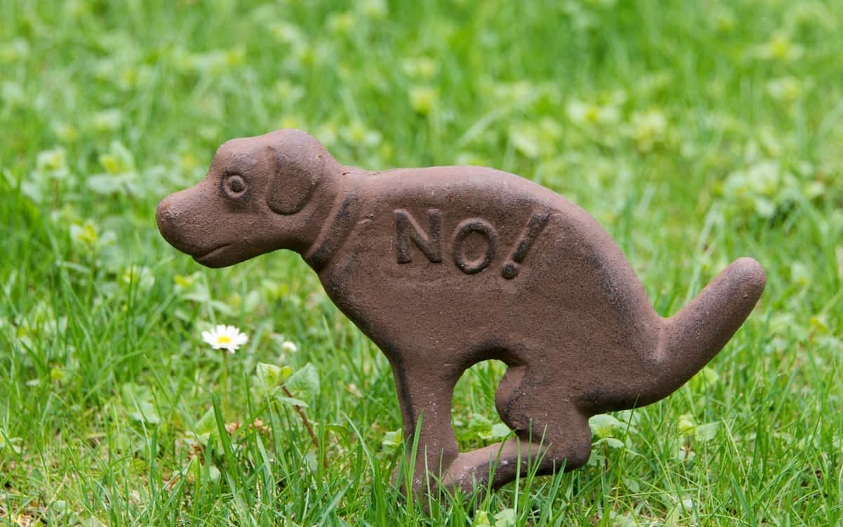Don't Make Your Dog Hold in Their Poop
