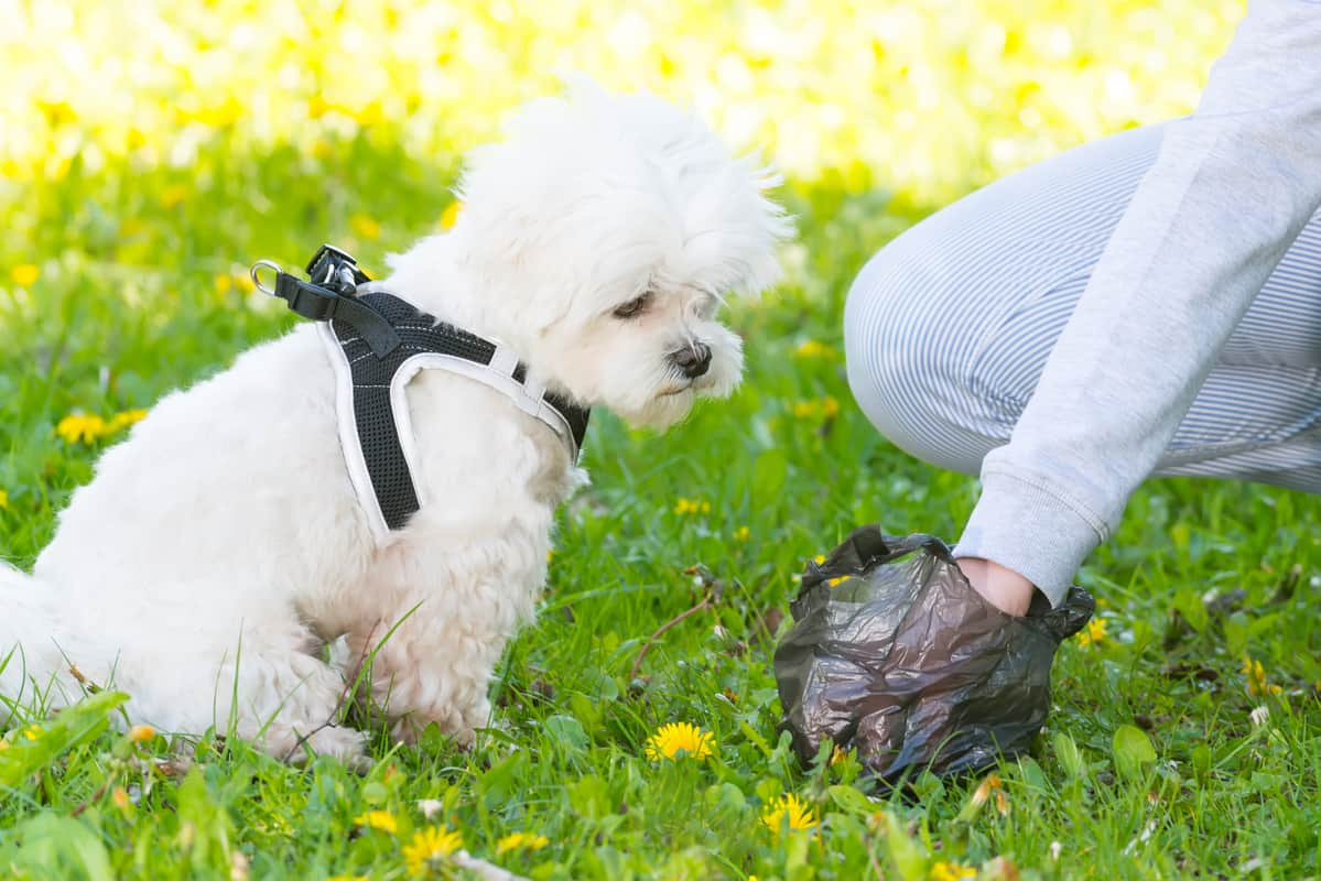 White Specks in Dog Poop & 5 Types of Worms in Dogs