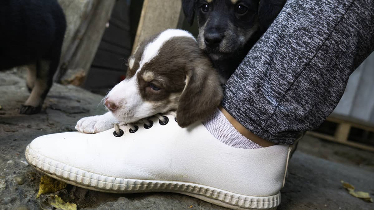 8 Reasons Your Dog Bites Your Feet While Walking