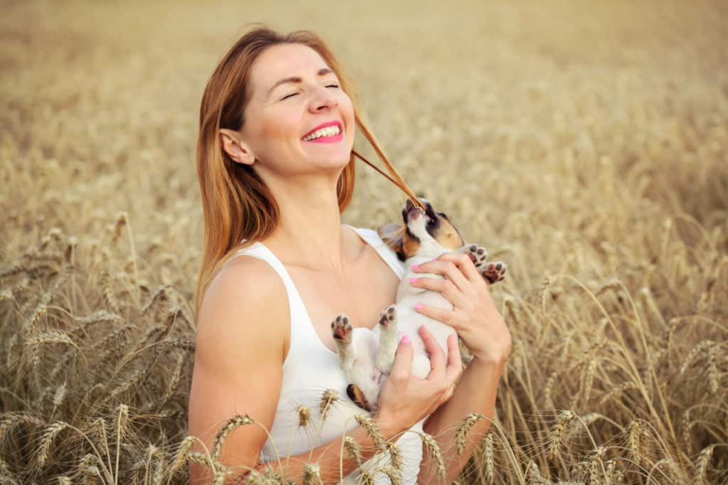 Woman with Jack Russell terrier puppy on her hands, wheat field in background, dog is restless and chewing the hair instead of posing.