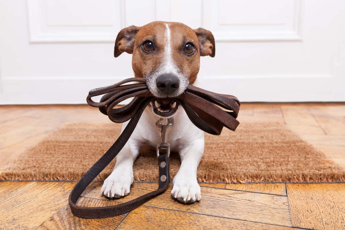 5 Reasons Why Your Dog Walks in Circles Around You