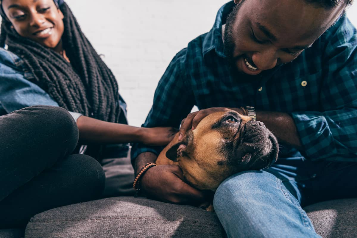 5 Reasons Your Dog Is Always Touching You